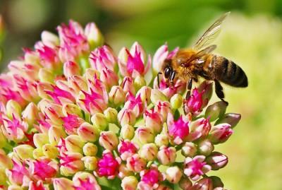 Actu-declaration-ruche-abeille
